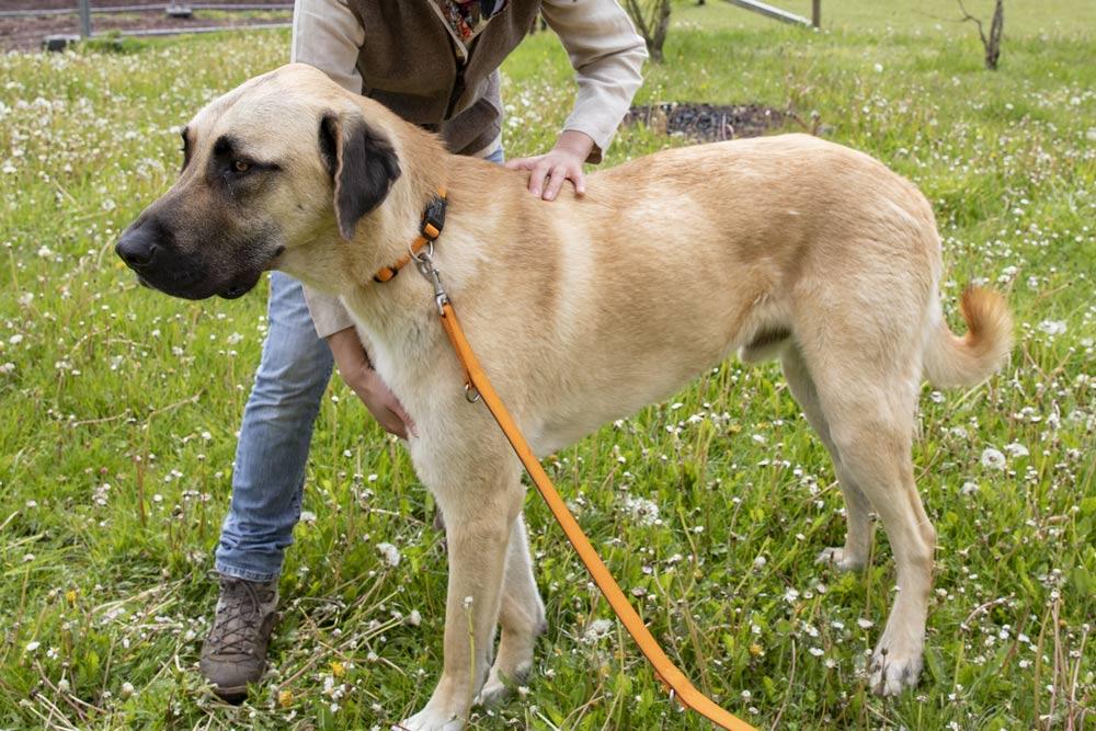 Osteopathie Hunde